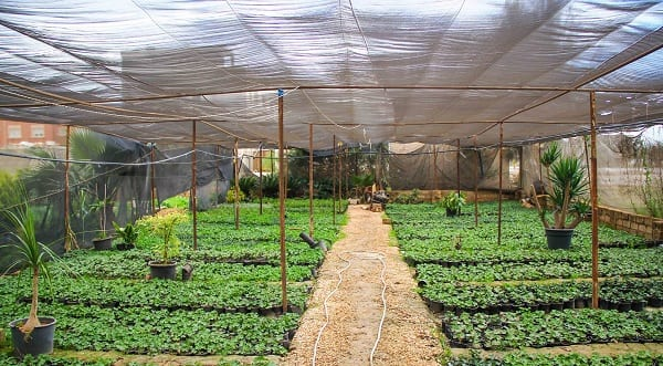 Your Guide to a Productive 'First Garden' Experience | Productive Muslim