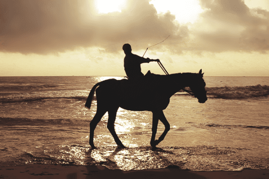 Productive Muslim Horses and Horse Riding in Islam