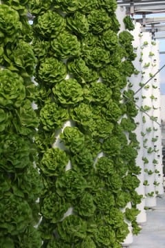 ProductiveMuslim Vertical Gardening Take it to New Heights Aeroponics