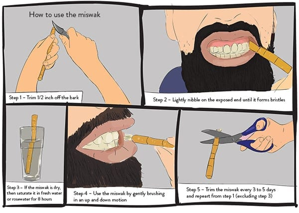 The Miswak: More Than a Convenient Twig | ProductiveMuslim.com