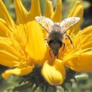 7 Great Life Lessons that Honeybees Teach Us